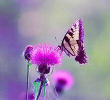 "Tiger swallowtail ""bokeh"" by Marcus Baker"