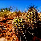 Cactus taken in Sedona, Arizona, USA by meganparker