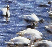 Swans, Abbotsbury, Dorset, UK by buttonpresser