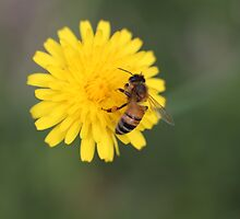Bumble Bee by Jacob Tansey