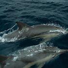 Chasing Dolphins  by Kip Nunn
