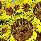 IPhone Case: Smiling Sunflowers by Doty