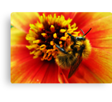 A bumblebee in a flower Canvas Print