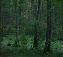 &&&  Fairytales  &&&  green forest wonder's. Poland. by Brown Sugar. Views (121) Favs (2). dziekuje ! Toda raba ! friends. by © Andrzej Goszcz,M.D. Ph.D