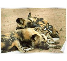 What dogs do best (African hunting dogs) Poster