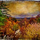 Fall View by DaraD