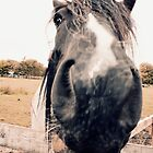 Horse Extreme Close-Up by Liam Liberty