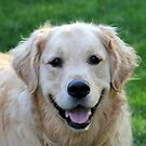 Healey My Golden...Mr. Happy Face by vette