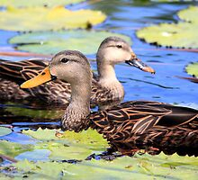 Mallard Pair by Sazzyshortness