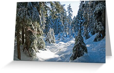 Beautiful BC Winter Day by Tracy Riddell