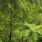 Tree Ferns by Badger Creek. by Bette Devine
