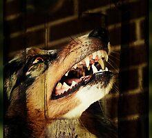 Werewolf Sam by jodi payne