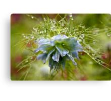 Rain Drops on a Blue Flower Canvas Print