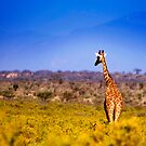 Samburu National Reserve, Kenya. 2009 by Damienne Bingham
