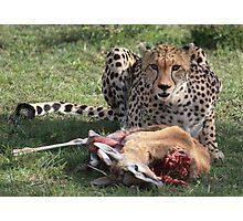 The Predator Photographic Print