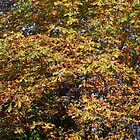 Autumn colours for iPhone by Philip Mitchell