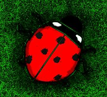 Ladybug by brickinthewall