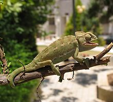 Chameleon 10 by IrinaBudovsky
