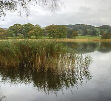 Esthwaite Water..At The Margins by VoluntaryRanger