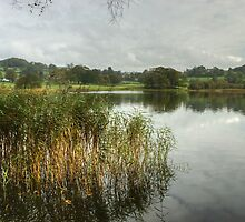 Esthwaite Water...Reeds by VoluntaryRanger