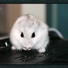 Mouse by Neutro