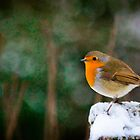 Red Robin by derekbeattie