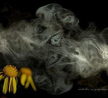 Optimitistic Dense Daisies © Vicki Ferrari Photography by Vicki Ferrari