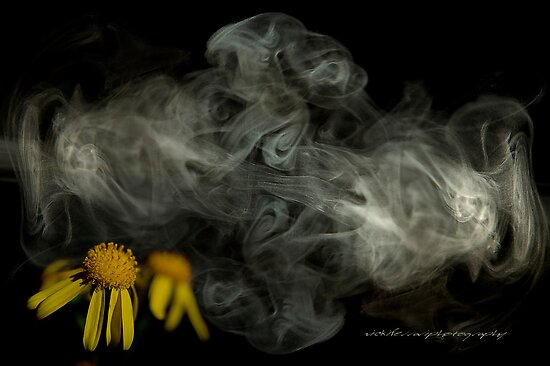 Optimitistic Dense Daisies © Vicki Ferrari Photography by Vicki Ferrari