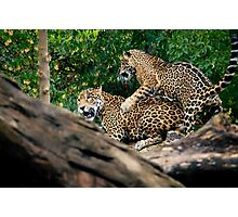 Come On Big Boy....Lets Play.......... Photographic Print
