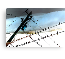 Bird Life ~ A series: cross communication Metal Print