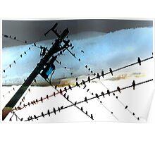Bird Life ~ A series: cross communication Poster