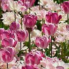 Pink & White Tulips by Renee Hubbard Fine Art Photography