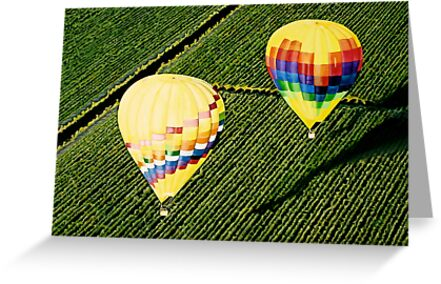 """""""Balloons Over Napa Valley"""" by Cindy Longhini"""