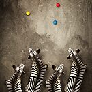 Animal Art - Zebra Petanque by Michael Murray