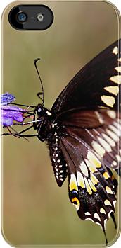 iPhone Case - Swallowtail by Jim Cumming