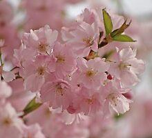 Springtime Blossoms by Debbie Stika