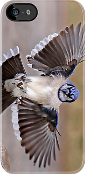 iPhone Case - Blue Jay by Jim Cumming