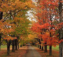 Fall Wonderland I by Debbie  Roberts