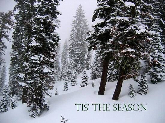 TIS' THE SEASON by teresalynwillis