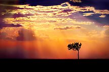 Sunset Over Masai Mara IV [Print & iPad Case] by Damienne Bingham