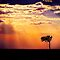 Sunset Over Masai Mara IV [Print & iPad Case] by Damienne Bingham