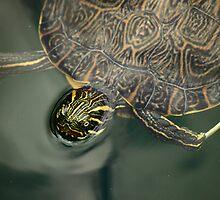 Turtle by RoomWithAMoose