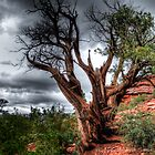 Tree of Ages by Vietvet67