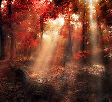 lightscanner by ildiko neer