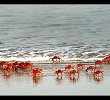 The King Crabs by J.N. SINGH