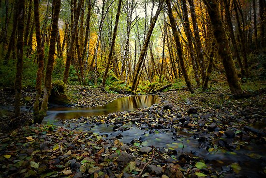 Resting Place by Charles & Patricia   Harkins ~ Picture Oregon
