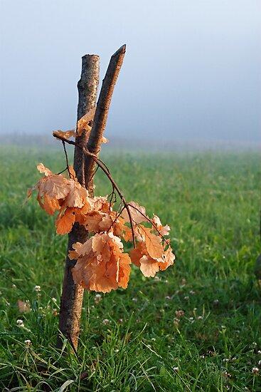 Oak bough by fotorobs