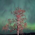 Tree &amp; Aurora Borealis -III by Frank Olsen