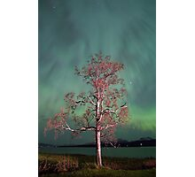 Tree & Aurora Borealis -III Photographic Print