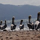 Pelicans with the mountains of the Sierra Madre as background by Bernhard Matejka